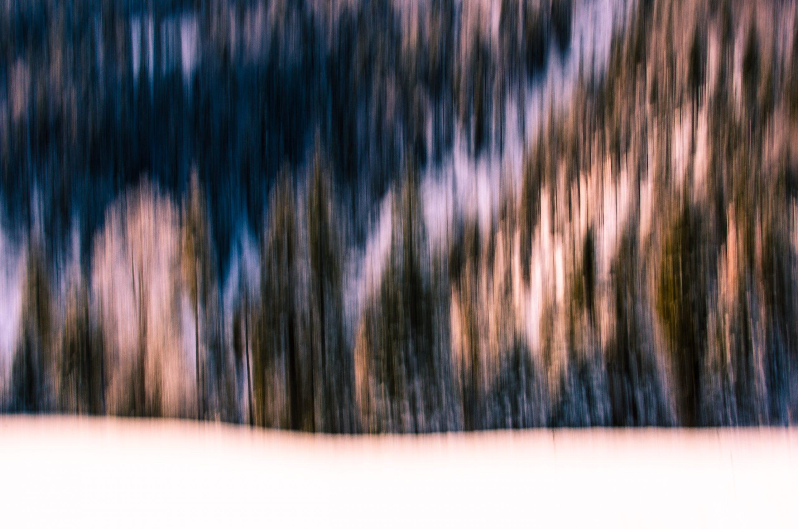 BL_Magnetic_Forest_-Alpenvorland-_SebastianKrawczyk
